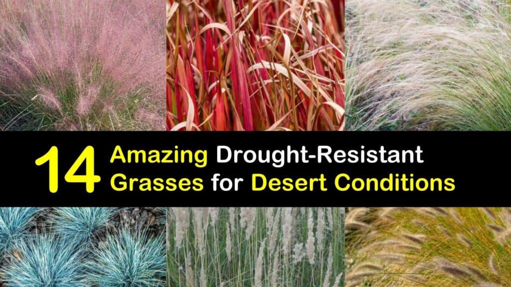 Grasses for the Desert titleimg1