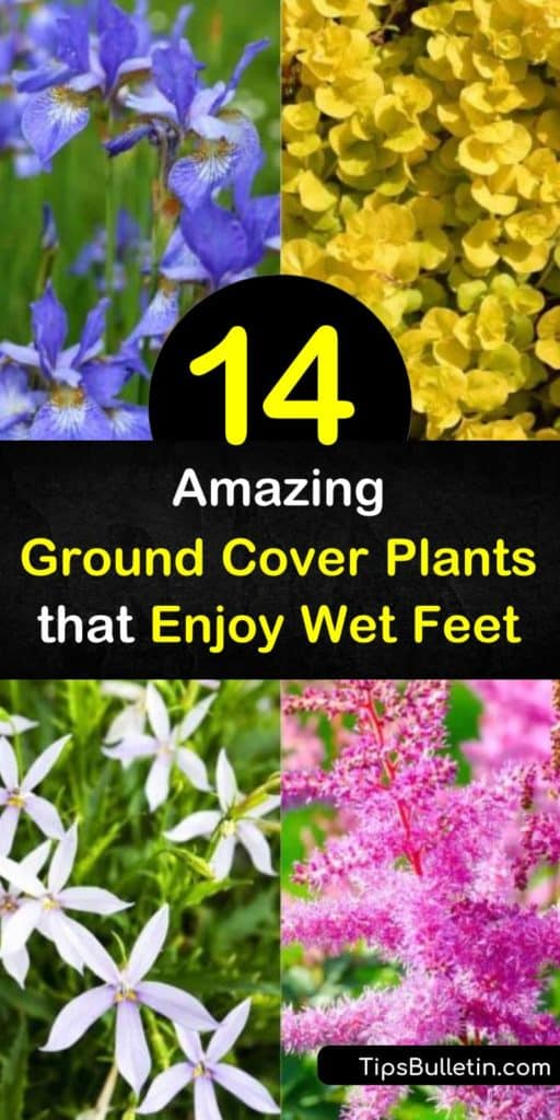 Make your garden even more desirable with iris, sedge, carex, and astilbe that are able to tolerate large amounts of water. Pops of ornamental grasses and plants with stunning green leaves provide limitless options for water-logged areas in your yard. #groundcover #plants #wet #soil