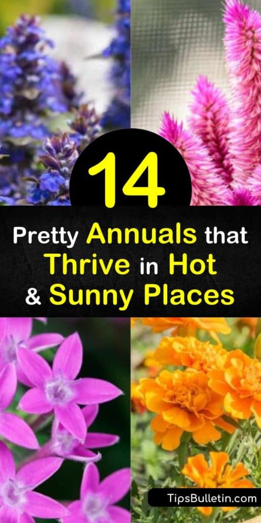 Wondering what to do with your hot and sunny yard? Planting heat tolerant annuals, such as pentas, begonia, portulaca, vinca, zinnia, and succulents is a great way to get started. They do well in dry locations and thrive in the worst heat. #heat #annuals #heattolerant #plants