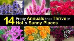 Heat Loving Annuals titleimg1
