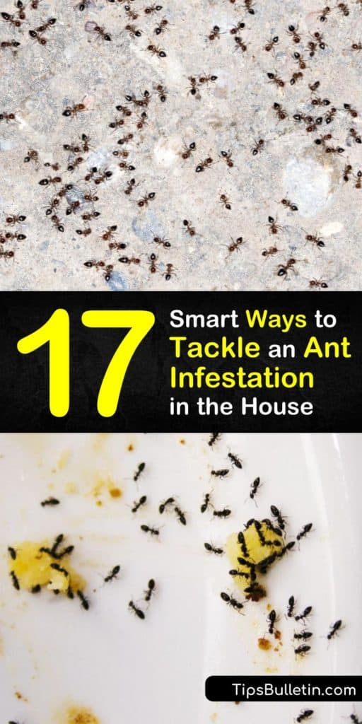 Read this ultimate pest control and ant infestation guide with homemade ant killer and repellent recipes. The article tackles issues regarding specific ant species, like carpenter ants, and teaches you how to eliminate their food source and spot pheromone trails. #get #rid #ant #infestation