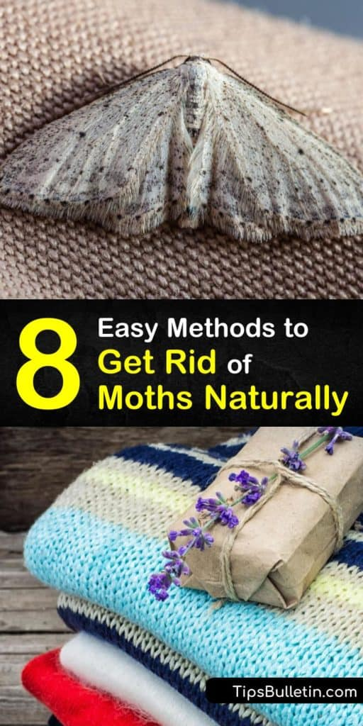 Learn how to eliminate a moth infestation in your closet or pantry. Store clothing in airtight containers to protect it from moth eggs. Use a natural form of pest control on moths hiding in crevices with a moth repellent made of herbs or essential oils. #moths #getridofmoths