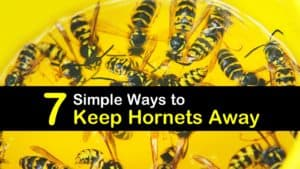 How to Keep Hornets Away titleimg1