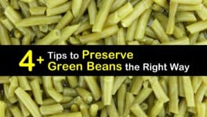 How to Preserve Green Beans titleimg1