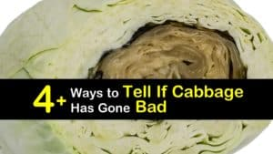 How to Tell if Cabbage is Bad titleimg1