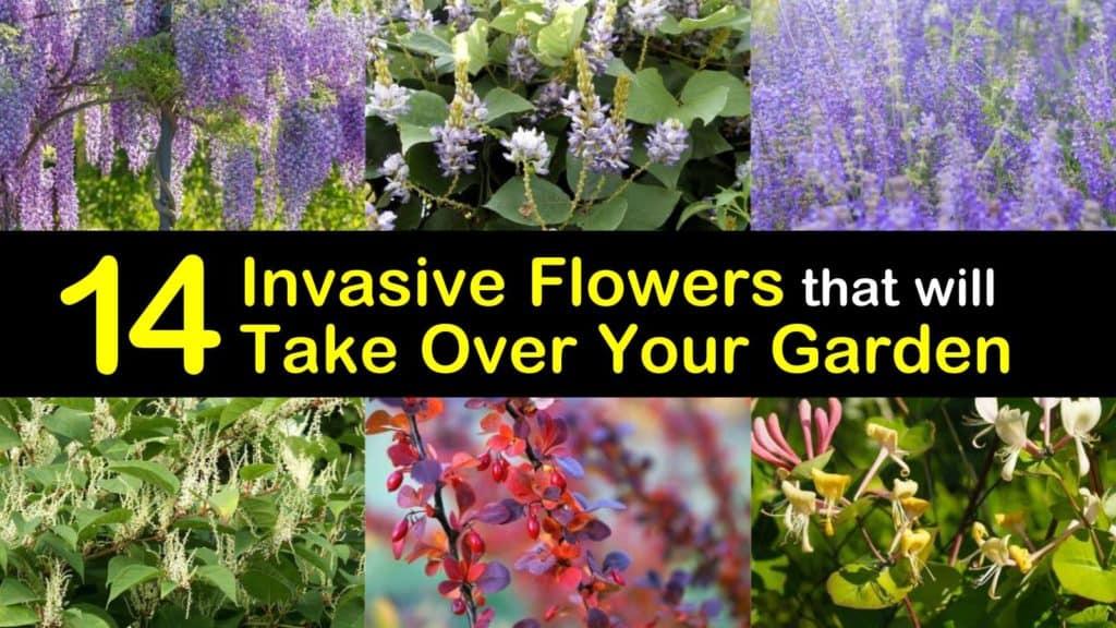 Invasive Flowers titleimg1