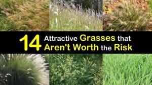 Invasive Grasses titleimg1