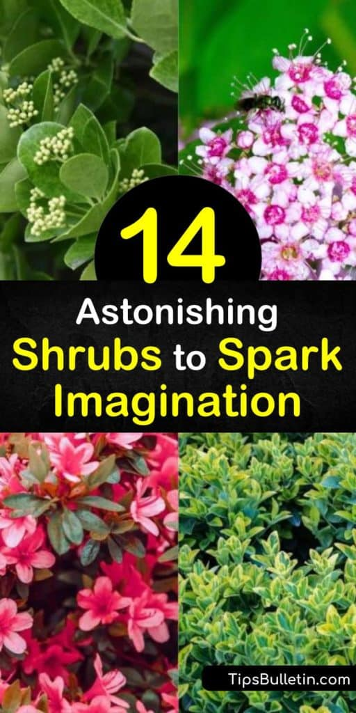 Add these low growing shrubs to your garden to fill in empty spaces and gaps between flowers. Plant stunning azalea and hydrangea bushes along the border of your home to create eye-catching displays. Use petite hedging plants and boxwood shrubs to create a unique landscape. #low #growing #shrubs