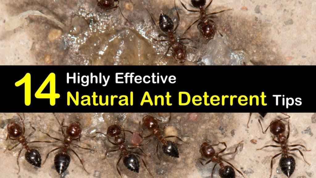 Natural Ant Deterrent titleimg1