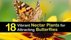 Nectar Plants for Butterflies titleimg1