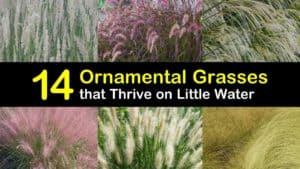 Ornamental Grasses titleimg1