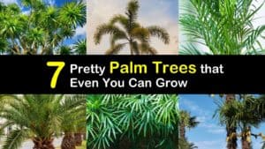 Palm Trees titleimg1