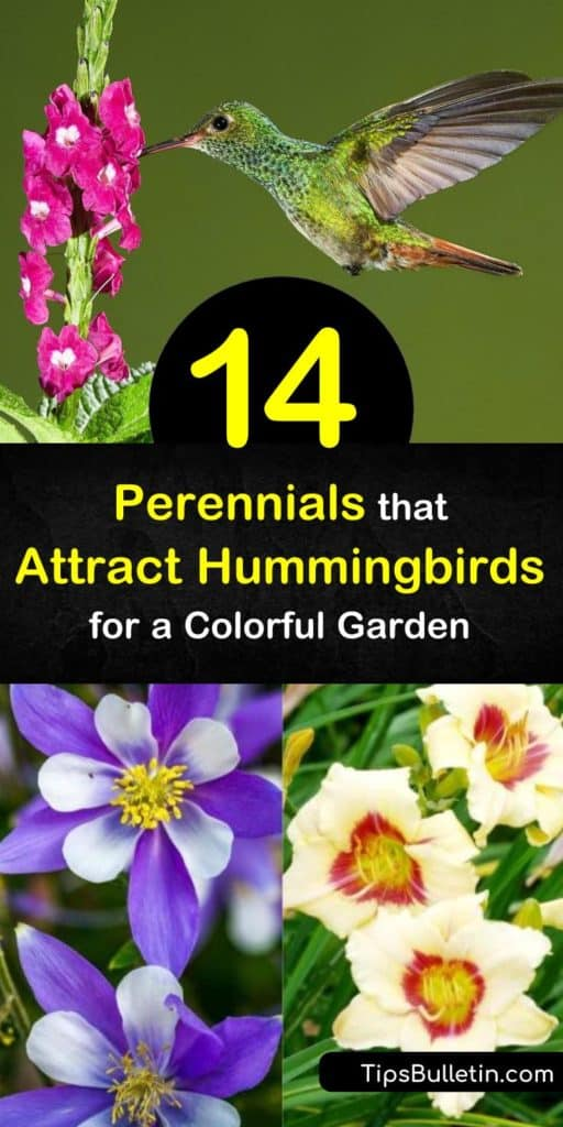 Discover how to attract hummingbirds to your yard by planting colorful and tubular flowers. Fill your garden with orange, pink, and red flowers such as monarda, lobelia, phlox, and bee balm to draw in these tiny birds. #perennialsforhummingbirds #hummingbirds #flowers #birds #plants