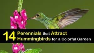 Perennials for Hummingbirds titleimg1