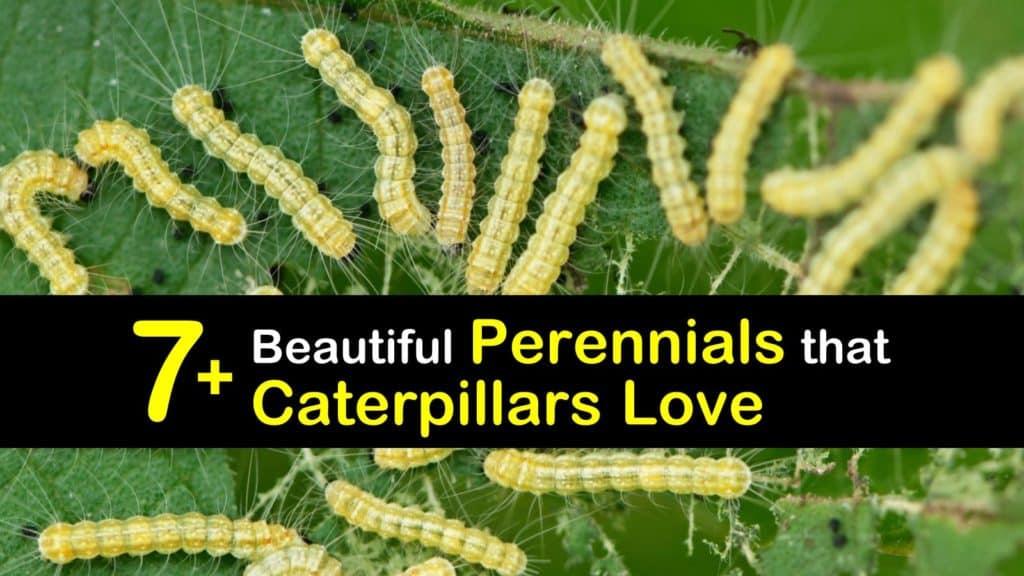 Perennials that Attract Caterpillars titleimg1