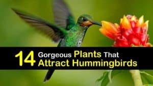 Plants that Attract Hummingbirds titleimg1