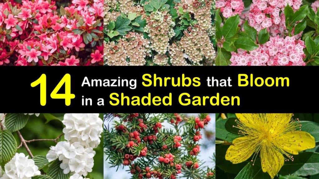 Shade Blooming Shrubs titleimg1
