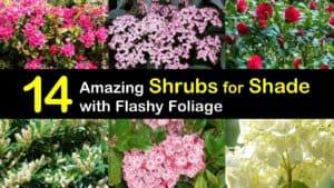 Shade Shrubs titleimg1