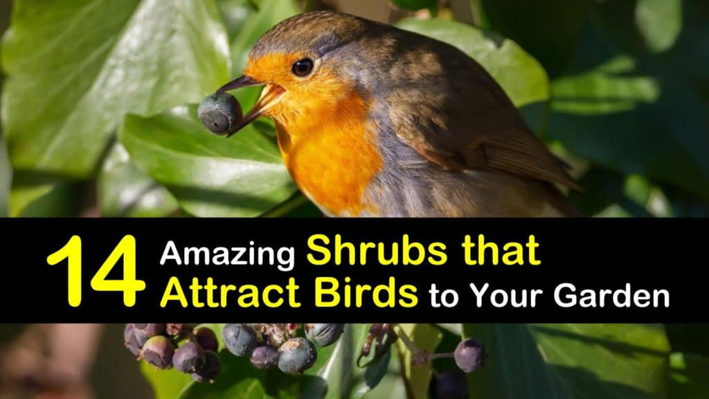Shrubs that Attract Birds titleimg1