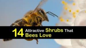Shrubs that Bees Love titleimg1