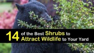 Shrubs to Attract Wildlife titleimg1