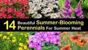 Summer Blooming Perennials titleimg1