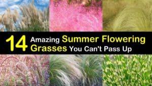 Summer Flowering Grasses titleimg1