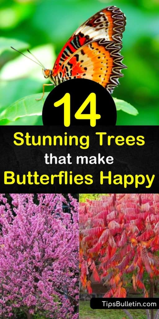 Draw butterflies to your yard by planting their favorite trees. Landscape with native plants such as spicebush, butterfly bush, dogwood, and black cherry trees to attract hairstreak, red-spotted purple, and mourning cloak butterflies. #treesforbutterflies #butterfly #trees #butterflies