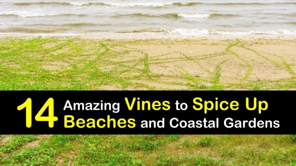 Vines for the Beach titleimg1