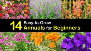 Annuals for Beginners titleimg1