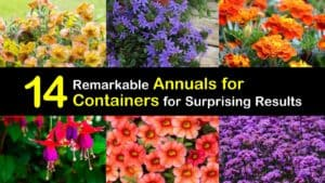 Annuals for Containers titleimg1