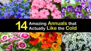 Annuals for Cool Conditions titleimg1