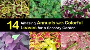 Annuals with Colorful Leaves titleimg1