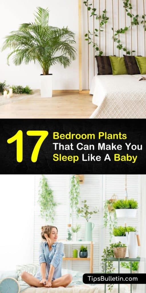 The best bedroom plants to get you a better sleep and brighten up your decor. Learn which small, indoor plants look great on bedside tables. Whether you choose decoration planters or hanging plants, these ideas will help you get a better nights sleep. #plantsforsleep #bedroomplants #houseplants