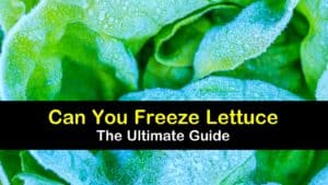 Can You Freeze Lettuce? titleimg1