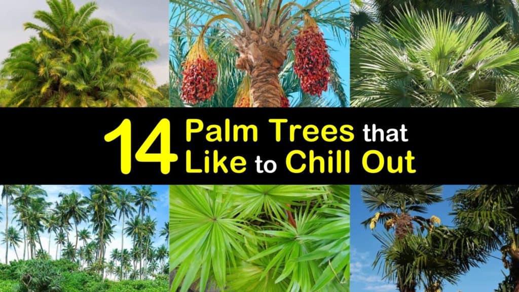Cold Hardy Palm Trees titleimg1