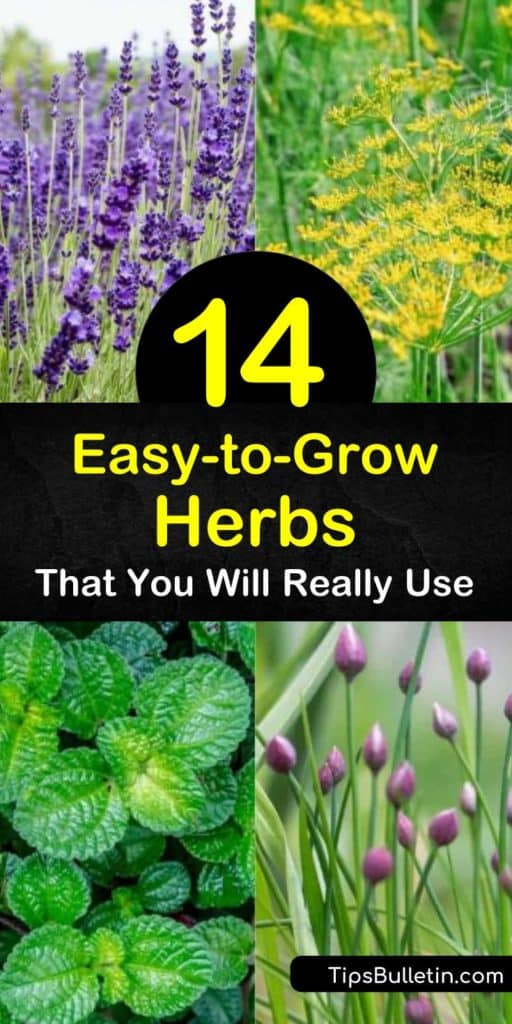 Learn how to grow herbs in an outdoor or windowsill garden and enjoy flavorful food year-round. Grow cilantro, basil, oregano, lemon balm, and spearmint plants and enjoy easy to grow fresh herbs in Greek, Italian, or other favorite cuisines. #easytogrow #herbs #growingherbs #herbgarden