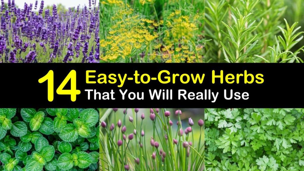 Easy to Grow Herbs titleimg1