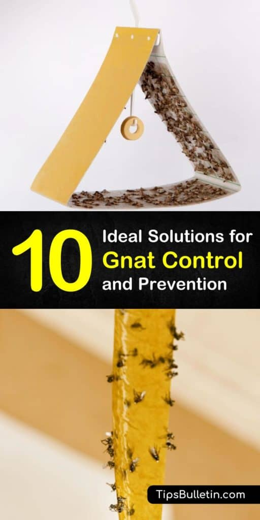 Discover the best methods of gnat control and prevention with homemade natural remedies. Effectively deal with fruit flies, mosquitoes, and other insects with the help of essential oils and learn to make fly traps with cider vinegar. #getridofgnats #gnatcontrol #preventgnats