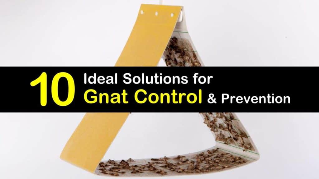 gnat control titleimg1