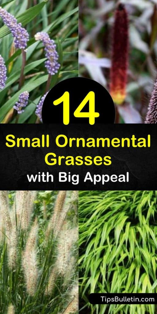 Add something special to your landscaping with the perfect ornamental grass. Fountain grass, Japanese sedge, festuca, and carex are only some of the dwarf grasses that have variegated foliage, love moist soil, and are useful for ground cover spots. #dwarf #grasses #smallgrasses