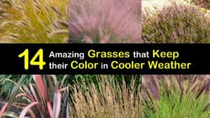 Grasses with Fall Color titleimg1