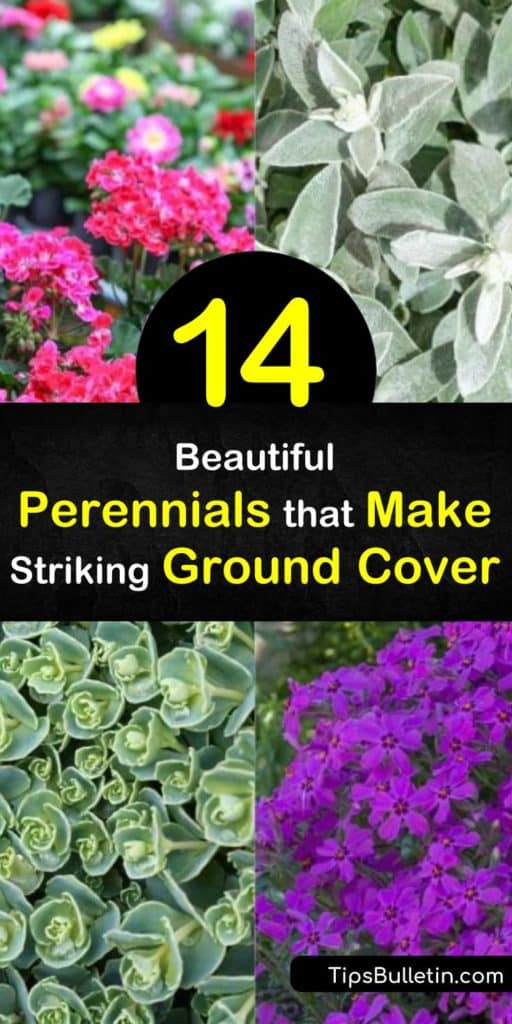When designing your landscape, don't forget to include perennial ground cover plants for your garden. Many of these are low maintenance plants, such as Creeping Phlox and Thymius, which provide your beds with green foliage year round. #perennialgroundcovers #bestgroundcover #colorfulgroundcover