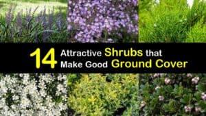 Ground Cover Shrubs titleimg1