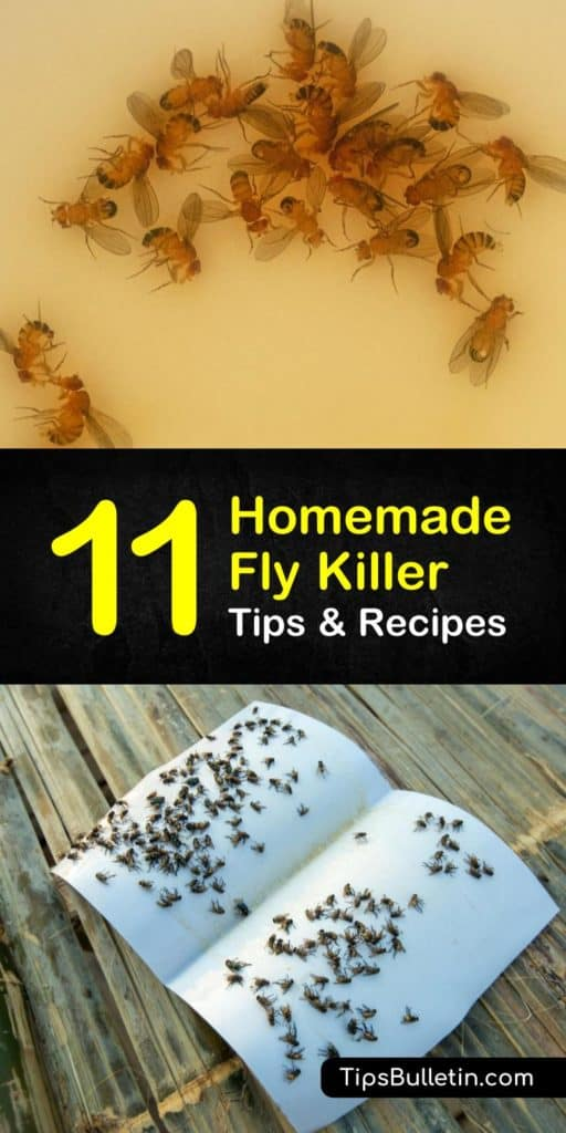 Useful Tips To Make Your Everyday Life Just A Bit Better! Tips and tricks for a homemade fly killer. Learn how to make fruit flies go away forever, and other DIY indoor pest control sprays using essential oils, apple cider, water, and other natural ingredients. #flies #pestcontrol