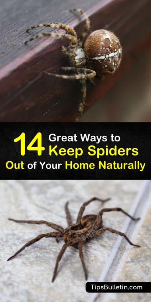 14 Great ways to keep spiders out of your home naturally - with recipes for homemade peppermint and vinegar repellant sprays. Quick and natural DIY ways to get rid of spiders at home, garage, basement, porch or yard. #spiders #repel #spider #repellent