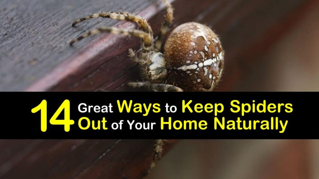 how to keep spiders away titleimg1