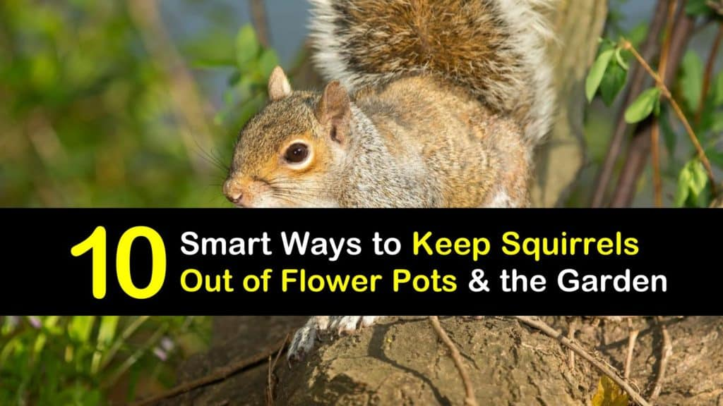 how to keep squirrels out of flower pots titleimg1