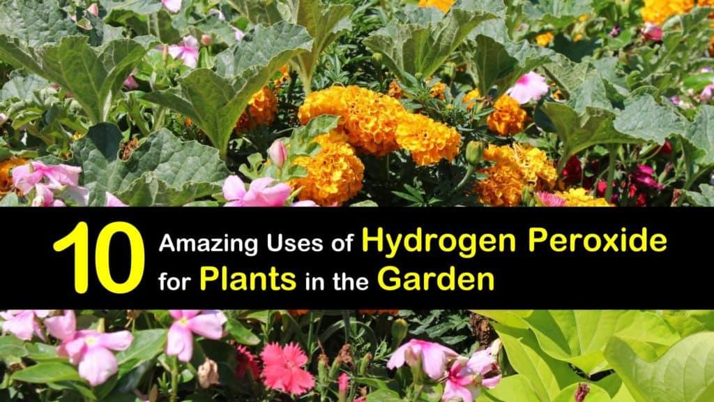 hydrogen peroxide for plants titleimg1