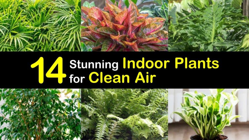 Indoor Plants for Clean Air titleimg1